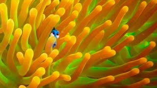 Exclusive! And New 'Finding Dory' Trailer
