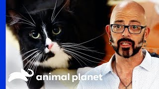 Frustrated Owner Considers Declawing His Cat | My Cat From Hell