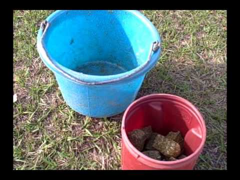 Feeding Your Horse Alfalfa Cubes: How and Why