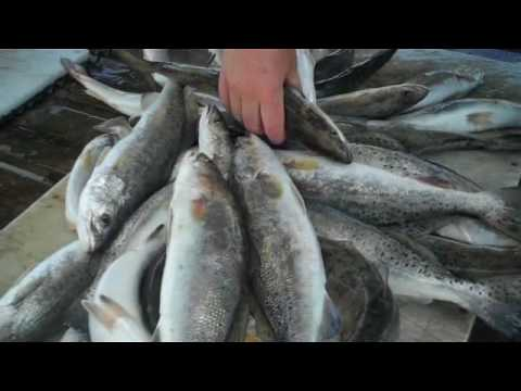 hopedale  louisiana fishinpox bioid purebay2200