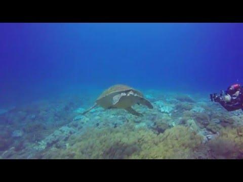 Scuba Diving - Xiao Liuqiu, Taiwan, November 7 and 8, 2015