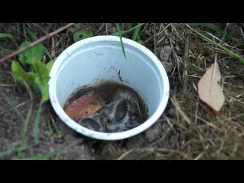 0 - Боротьба з гризунами на городі народними засобами