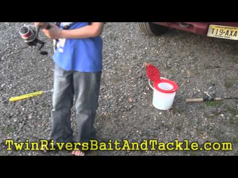 Matt's Nice Pickerel-New Jersey Father Son Fishing-TRBT