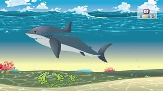 Dạy các con vật dưới biển cho bé nhanh biết nói hay nhất | Dạy bé học online