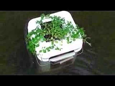 Home made pond skimmer with water plant youtube for Homemade pond skimmer