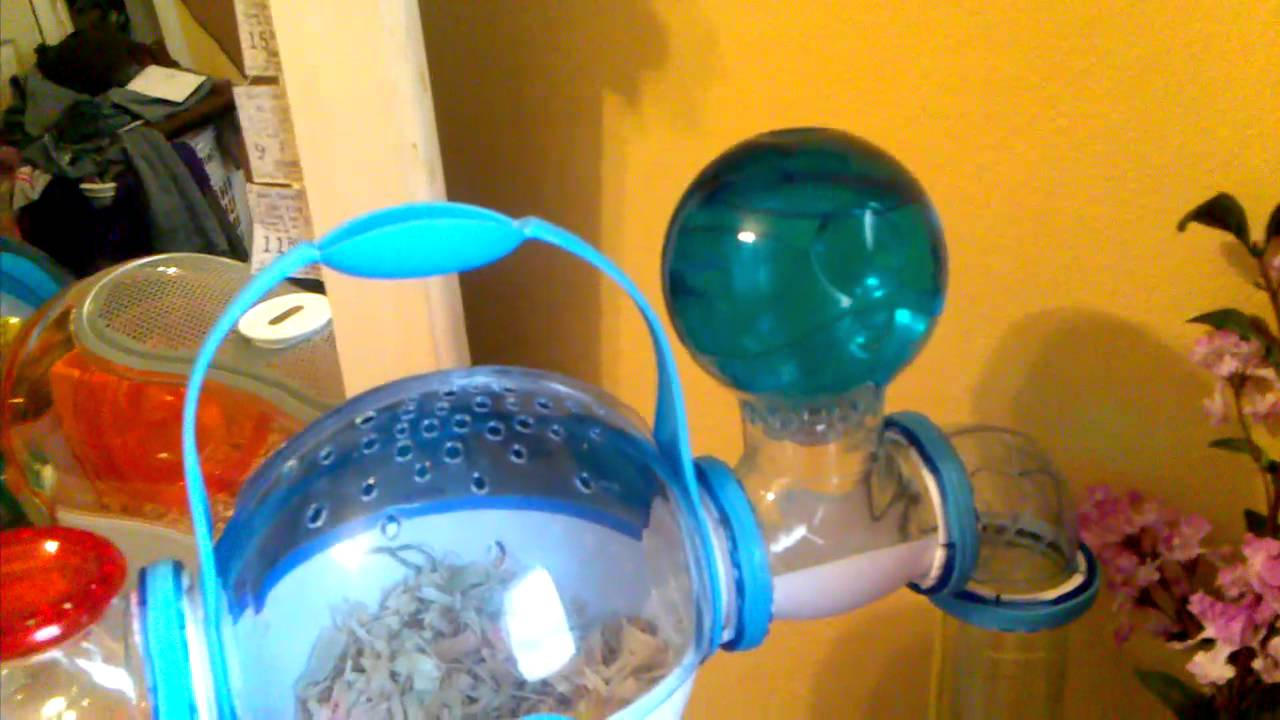 Can Cockateils Drink From A Hamster Water Bottle 56