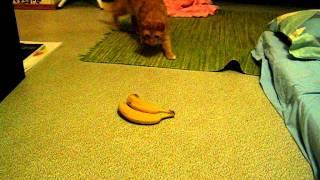 Este gato le tiene pánico a los plátanos