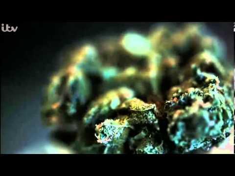 EXPOSURE - Britain's Booming Cannabis Business