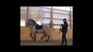 Horses in training with Manuel Trigo, 4th Semester 2010 Part I