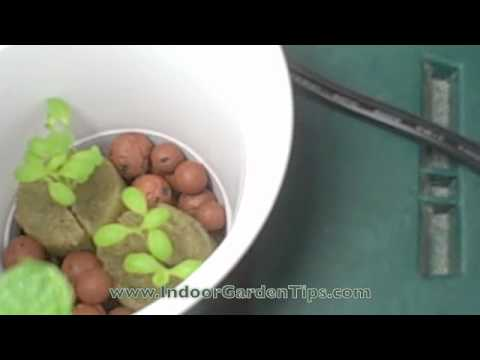 Small Indoor Vegetable Gardening - Hydroponic Grow Box