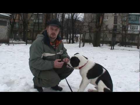 Уроки дрессировки собак - видео