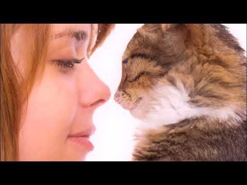 КАК ПОНЯТЬ ЯЗЫК КОШЕК  HOW TO UNDERSTAND THE LANGUAGE OF CATS