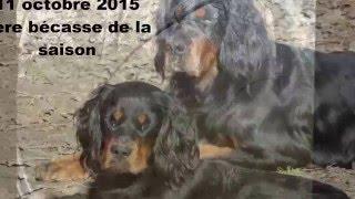 Chasse Bécasse 2015-2016 (Setter Gordon)