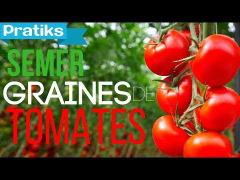 comment semer ses graines de tomates youtube. Black Bedroom Furniture Sets. Home Design Ideas