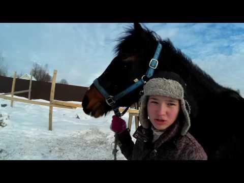 Наша лошадь Русский рысак Рада. Первые шаги общения с лошадью.