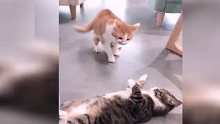 Laughing in the end 2019 Cute and funny cat and dog ㅋㅋ ㅋㅋㅋ # 1​ 웃음참기 2019 귀엽고 웃긴 고양이와 개 ㅋㅋㅋㅋㅋ #1