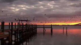 Blackbirds at Sunrise || ViralHog