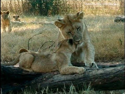 Johannesburg, Lion Park - South Africa Travel Channel