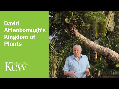 David Attenborough's Kingdom of Plants - Introduction