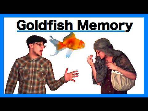 Goldfish Memory.