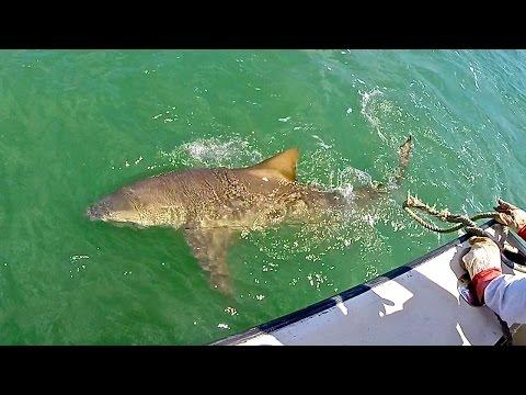 Shark Fishing Charter Florida
