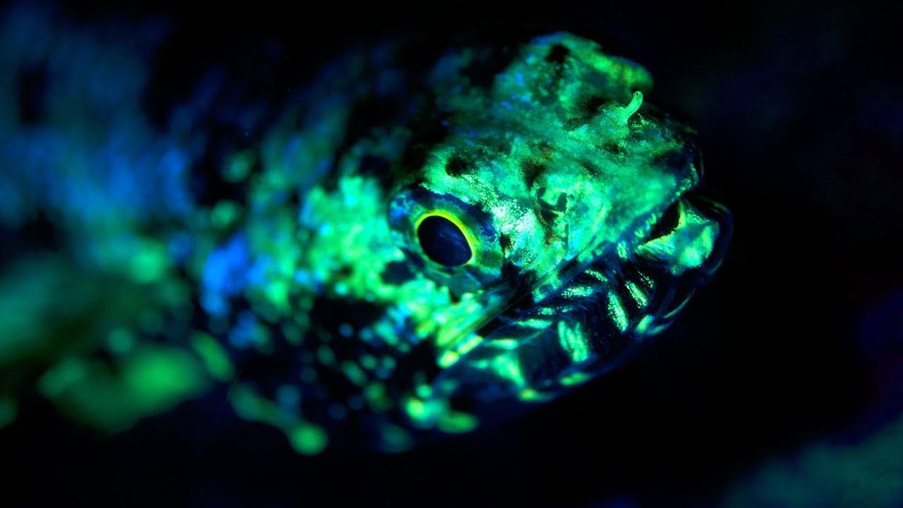 Fluoro Diving Fluoro_diving
