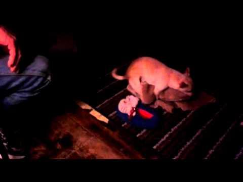 Porn Star Puppy video