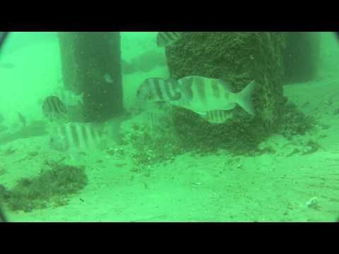 March Sheepshead Fishing