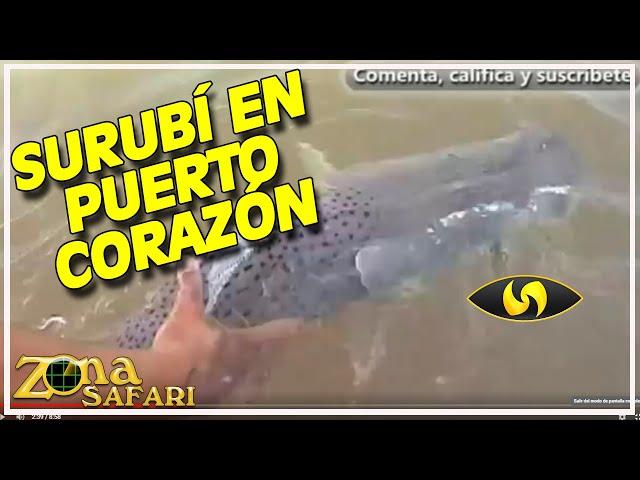 Pesca de Surubíes y Pacú en Rzepesky Corrientes - Zona Safari TV