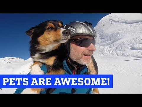 People Are Awesome & The Pet Collective present: Pets are Awesome! MP3