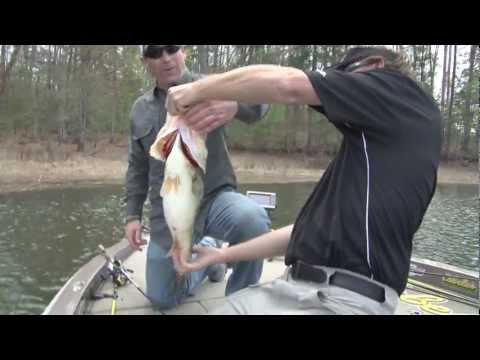 Giant Bass Caught Sight Fishing on Toledo Bend