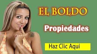 Boldo Propiedades - Para que sirve El Boldo