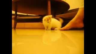 Gato jugando con los piés