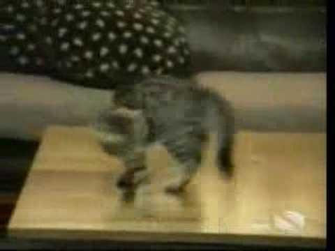 Gatos - Gatitos graciosos y risueños