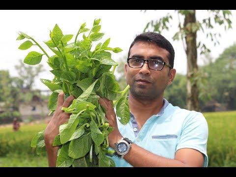 Farm fresh Basella alba drumstick curry recipe | Village food recipe pui shak and sojne data curry