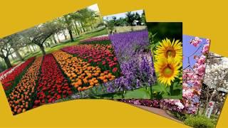 nhạc tết - hoa tết 2019 - Tet flowers 2019