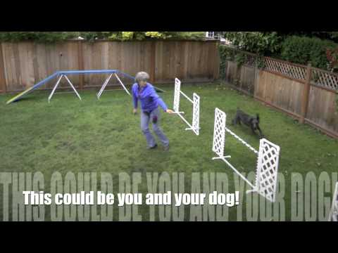 DAFT backyard dog agility students
