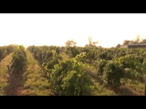Shawnee Hills Wine Trail - Southernmost Illinois