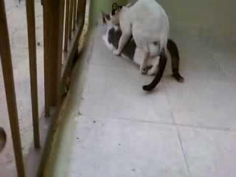 imagenes de perros follando: