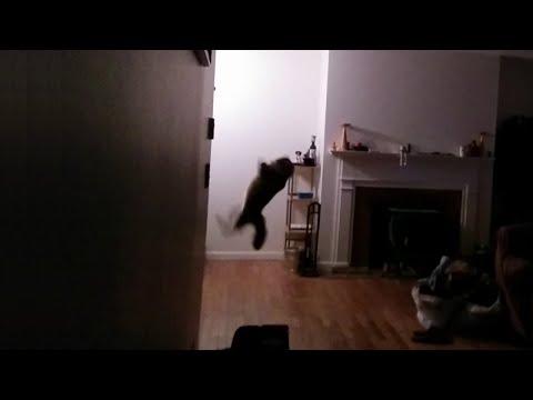 猫VSコウモリ...
