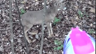 Whitetail Deer and a Nerf Gun