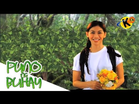 Puno ng Buhay | Philippine Forest Formations | Grade 7  Science