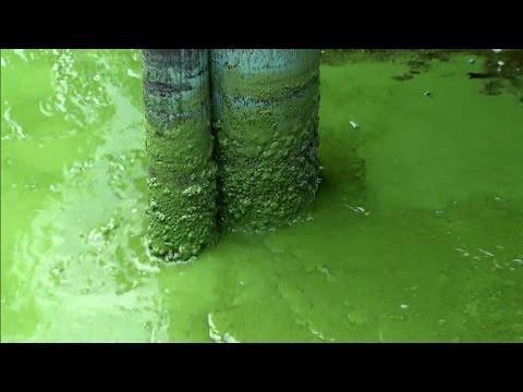 Thick, smelly, toxic algae invades Florida beaches