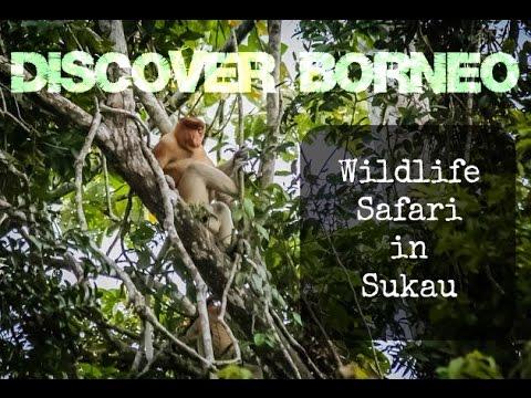Wildlife Safari in Sukau Borneo, Birdwaching On The Kinabatangan River