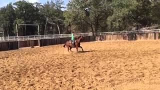 Wade- Jared Lesh cowhorses