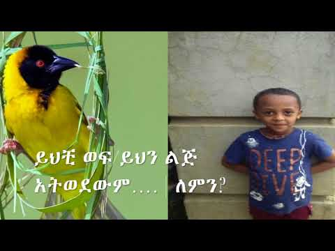 Amazing Story....You Must Check This Out!! ይህቺ ወፍ ይህን ልጅ አትወደውም…  | ለምን?