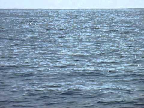 Whale Watching, Mirissa (Sri Lanka) - Blue whales