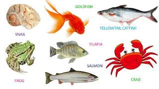 BÉ HỌC TIẾNG ANH_Tên các con vật trong tiếng Anh (P4)_LEARNING ENGLISH FOR KIDS_Name of animals