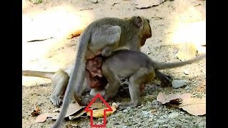 WOW! Three baby monkeys, Baby Timo so cute & small one,why they do like this?