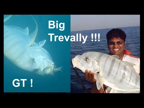 Fishing Adventures #63 - A Good Day's Fishing in the Abu Dhabi Channel - Trevally Kingfish